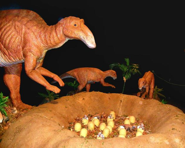 A Maiasaurus and her young will be on display at the Bishop Museum