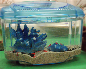 Teachers can win this shrimp aquarium